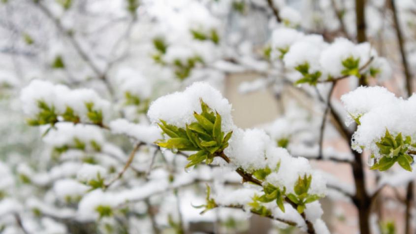 Zima to nevzdává. Tento týden ještě bude sněžit