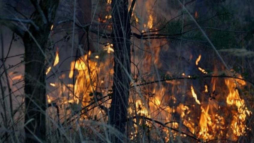 Sedm hasičských jednotek likviduje rozsáhlý požár na dopadové ploše Brda, hasičům komplikuje práce silný vítr