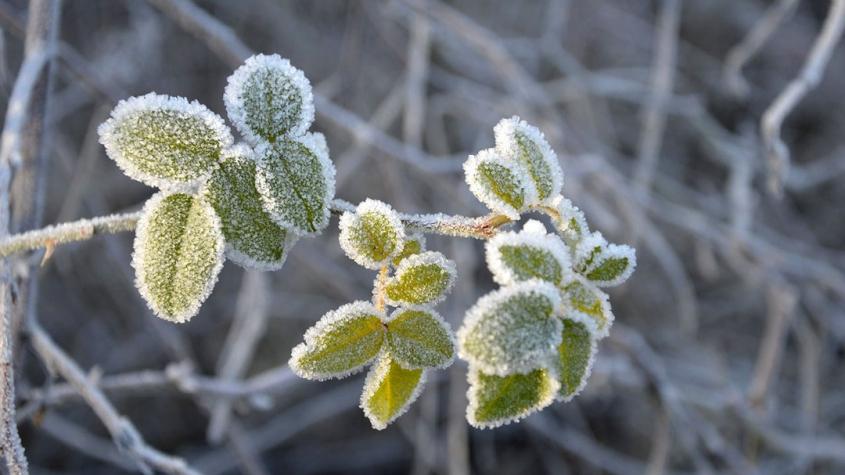 V úterý ráno může mrznout, přes den se očekává silný vítr