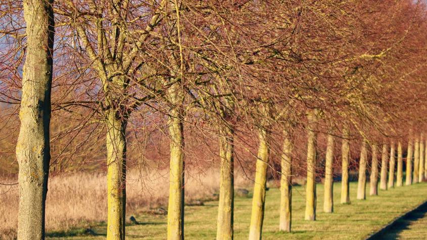V Příbrami se pokácí suché a nemocné stromy