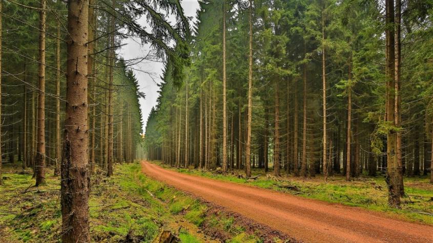 Vojenské lesy s vědci vyvíjejí metodu síjí lesních dřevin, chtějí obnovovat les v pyrotechnicky zatížených lokalitách v Brdech