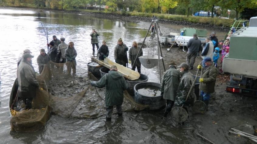 Výlov Sadoňského rybníka doprovodí myslivecké troubení i soutěže pro děti