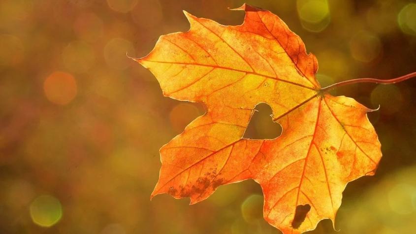 Meteorologové: Teplé počasí zůstane až do konce září, v říjnu se začne ochlazovat a přibude srážek