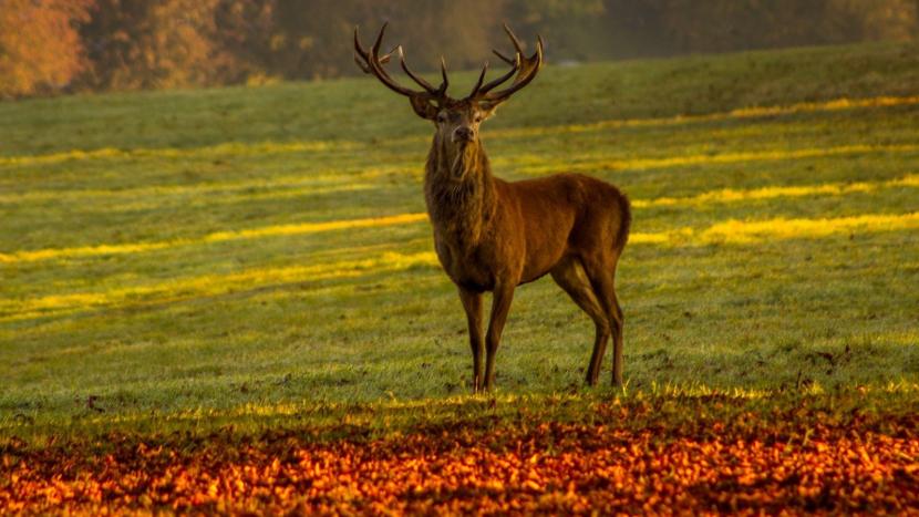 Lidé ve Zduchovicích v referendu odmítli výstavbu jelení obory