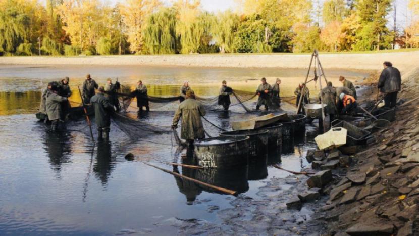 Nový rybník v Příbrami se vypouští, v sobotu se koná výlov