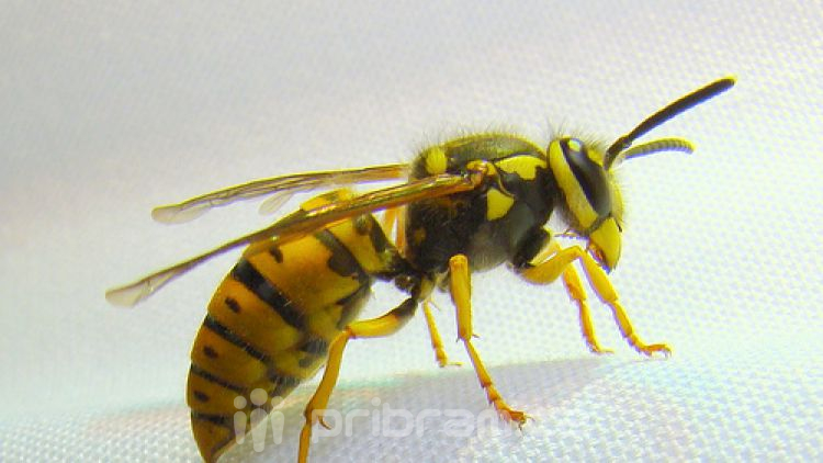 Záchranáři varují před bodnutím hmyzem