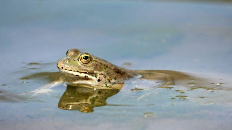 Velký Raputovský rybník na Příbramsku se stal přírodní památkou