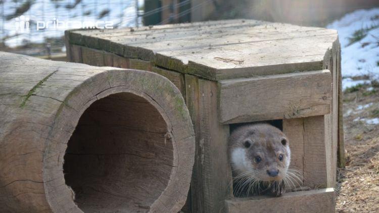 Zookoutek na Nováku poskytne domov možná i Tadeášovi