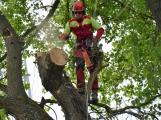 V lesoparku probíhá revitalizace porostu podél Litavky
