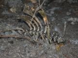 Houbaři se vrátili domů otřeseni, našli mrtvá těla zvířat
