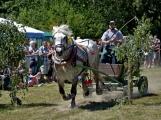 Divácky nejatraktivnější byla formanská jízda, která ukázala, jak přesně a rychle se dá jezdit s koňským povozem