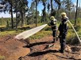 Brdské lesy daleko více ohrožují lidé než kůrovec