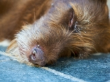 Travič se stal noční můrou pro majitele psů i koček
