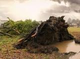 Slunečnému podzimu definitivně odzvonilo? Meteorologové varují před silným větrem, který snad přinese i déšť