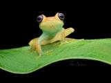 Jak se fotí zvířata v tropech? To na přednášce prozradí fotograf Petr Bambousek