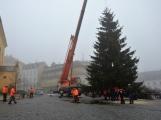 Vánoční strom jsme provázeli z Lazce až na náměstí TGM