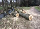 V lesoparku začalo kácení nebezpečných stromů