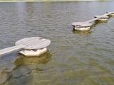Ostrůvek Nového rybníka je z důvodu hnízdění labutí dočasně uzavřen