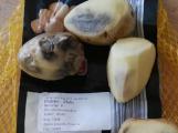 České brambory nejsou, musí je nahrazovat dovážené, dražší