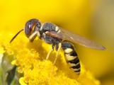 Na střeše kulturního domu v Příbrami se možná budou chovat včely