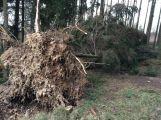 Vítr na Příbramsku vyvrátil desítky stromů