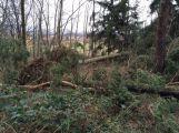 Dva stromy spadly na projíždějící auta