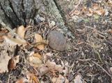 Nález nevybuchlé munice v CHKO Brdy