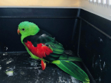 Městští strážníci odchytili papouška