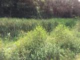 Čekalíkovský rybník čeká revitalizace. Potřebuje ji jako sůl