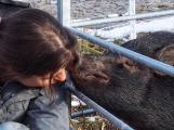 Výtvarnice si založila azyl pro hospodářská zvířata. Stálo ji to většinu vztahů