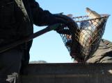 Barbora zaměstnala rybáře