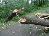 Varování meteorologů: Silný vítr může vyvracet stromy