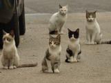 Kočky toulající se v ulicích Příbrami není kam umístit