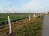 Na Dobříšsku budou vysázeny zhruba dvě stovky stromů