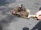 V CHKO Brdy opět probíhá pyrotechnická očista
