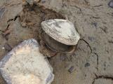 Na březích Orlické přehrady uvízly škeble