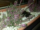 Zloději v Dobříši vyrýpávají i kytky z truhlíků