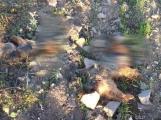 U obce Hluboš byli dnes ráno nalezeni dva mrtví jorkšíři