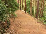 Zákaz vstupu do lesních porostů někde potrvá ještě zhruba týden