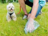 Přístup pejskařů se zlepšil, vysavač psích exkrementů je však stále v permanenci