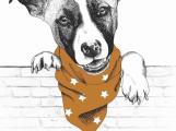 Příběh velké psí lásky představí v domě Natura