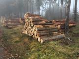 Les na Červené se mění. Jehličnaté stromy nahradí buky a duby