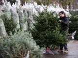 Jak pečovat o vánoční stromek, aby dlouho vydržel?