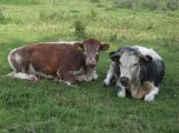 Neznámý zloděj ukradl dobytek z farmy