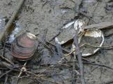 Na Orlíku se podařilo zachránit odhadem až 10 tisíc škeblí