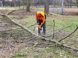 Na Nováku probíhá prořez stromů. Některé bude třeba pokácet