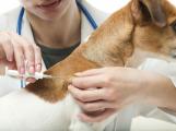 Nezapomeňte na povinný čip pro psa. Hrozit bude pokuta až 20 tisíc