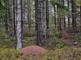 Na zapomenutý vrch nyní zapomeňte. Platí tu dočasný zákaz vstupu, hrozí pád suchých stromů