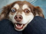 V Příbrami žije bezmála tři tisíce psů, někteří z nich však načerno