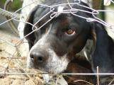 Senátoři se postavili za práva zvířat. Za týrání by mohlo hrozit až šest let vězení